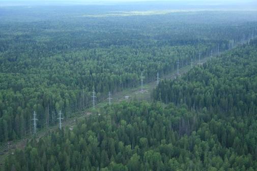 ФСК ЕЭС расчистит 8 тыс. га трасс линий электропередачи на Северо-Западе для защиты от лесных пожаров