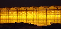 Rosseti FGC UES provides 142 MW of power to Yelets Vegetables greenhouse farm