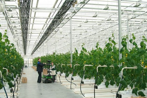 Federal Grid Company to provide 22 MW of power to Tomsk region's largest greenhouse farm